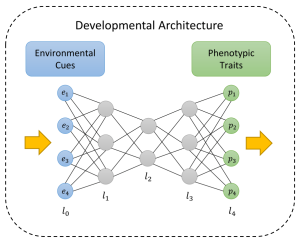Structure of development in plastic organisms